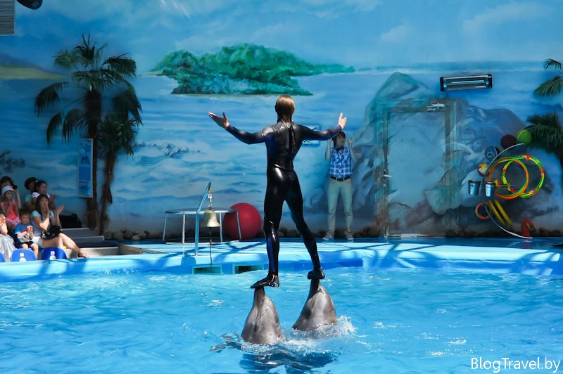Дельфинарий Немо в Минске