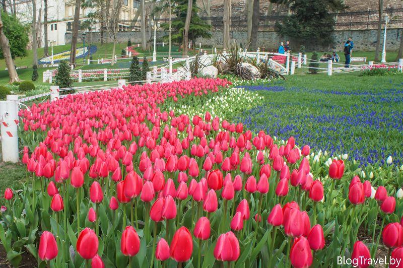 Фестиваль тюльпанов - парк Гюльхане